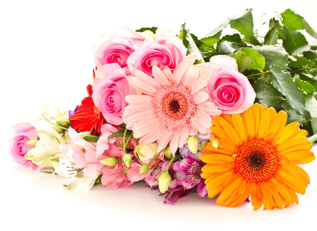 Цветы картинки букеты на белом фоне